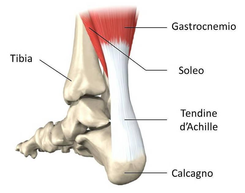 La rottura del tendine d'Achille ha un forte impatto sulla carriera
